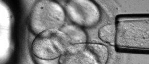 Aumenta el virus del papiloma en España 1