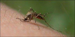 pero-que-mosquito-les-ha-picadop1