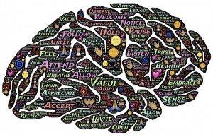 brain-744207_1280(1)