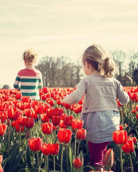Primavera y la esperanza 1